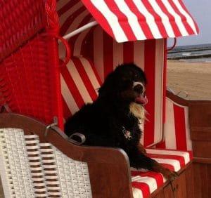 Strandkorb am Hundestrand in Koserow mit Hund.